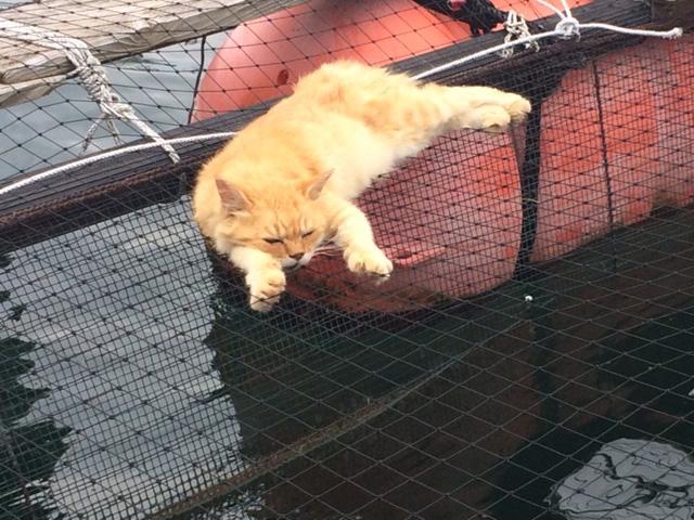 下松市栽培漁業センターの動物職員